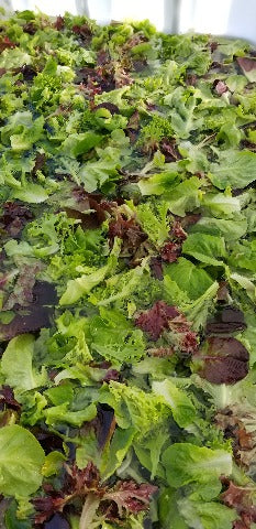 Salad Mix - Seasonal Blend