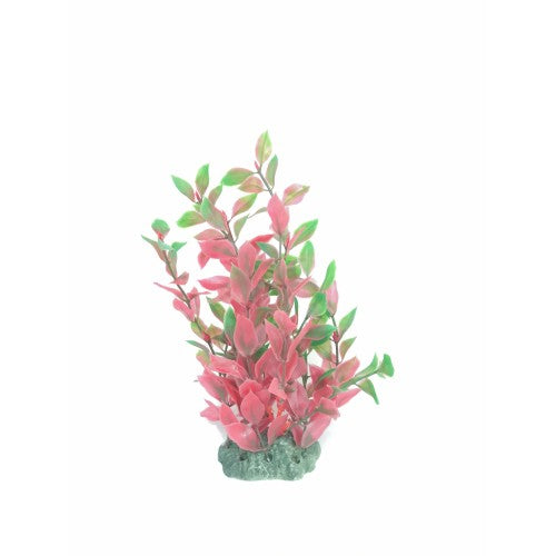 Sea Star Aquarium Plant