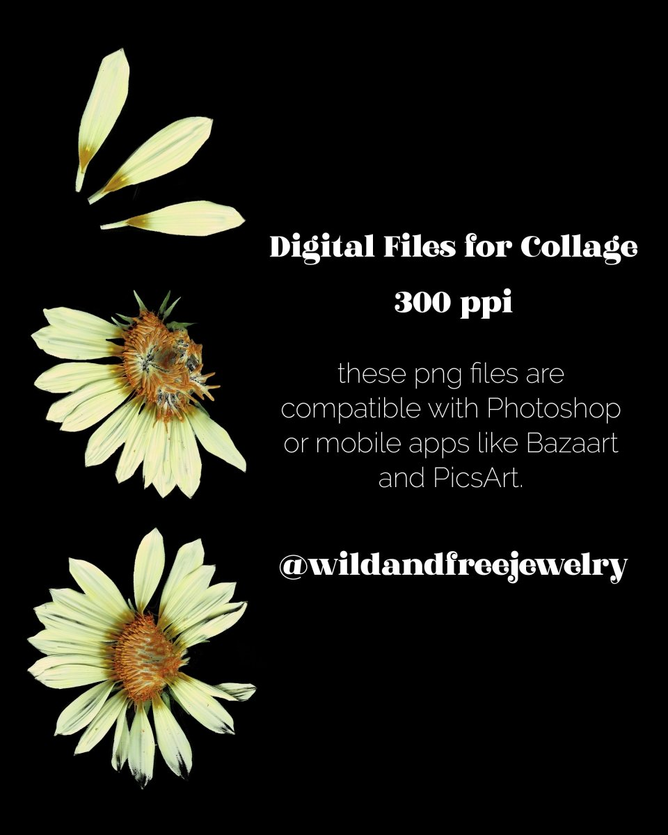 Digital Download | Distressed White Flowers | PNG Files for Collage - Wild & Free Jewelry