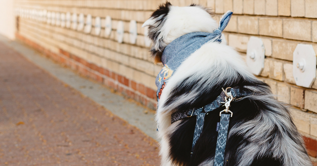 Southwest Dog Leash and Harness