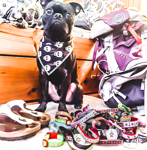 Julio helping pack up some gear for the pups in need in Phuket