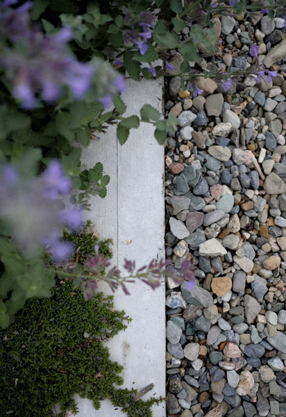 Catmint and Thyme