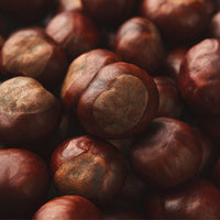 Chestnut Featured Ingredient - L'Occitane