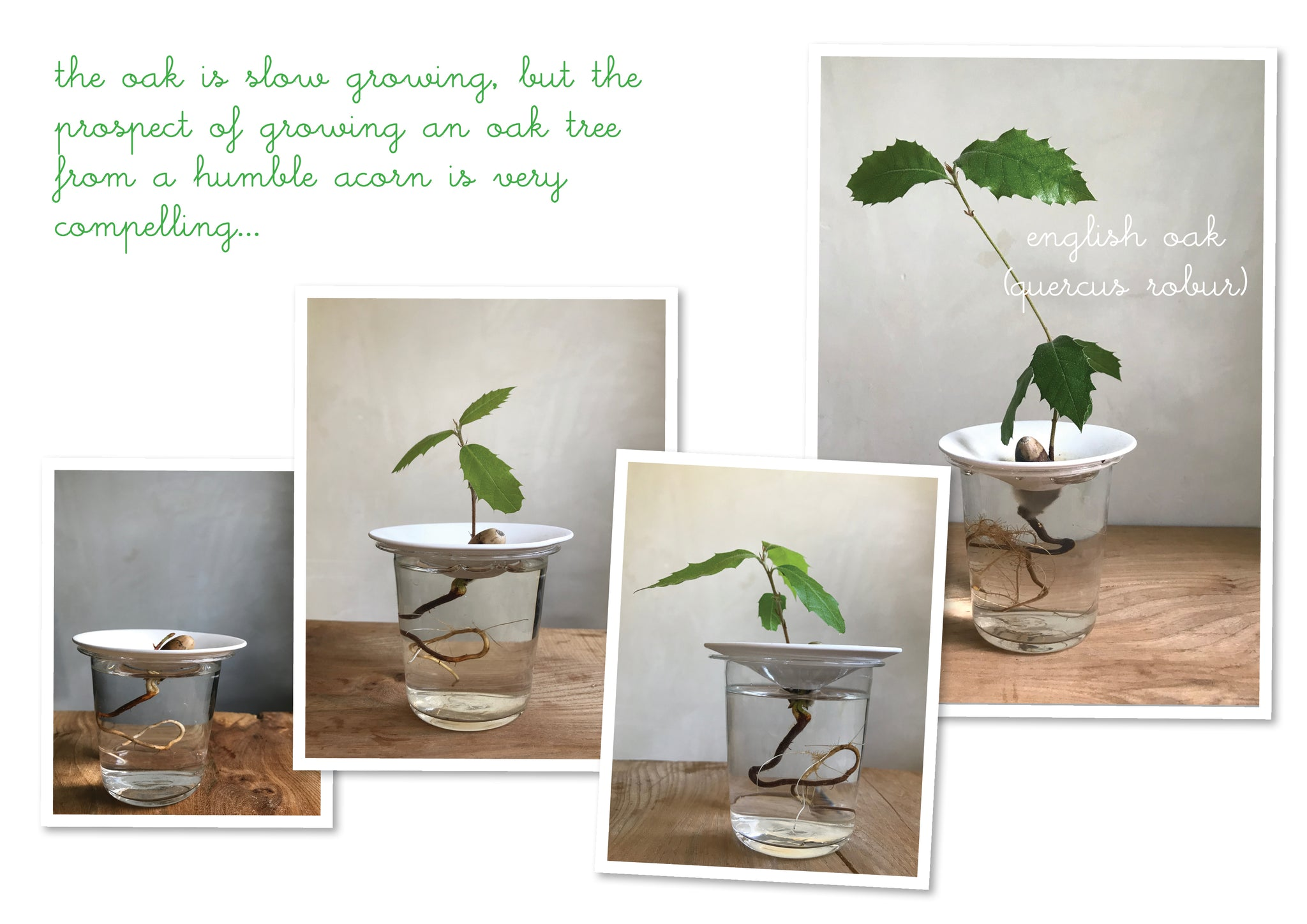 germinate seeds at home