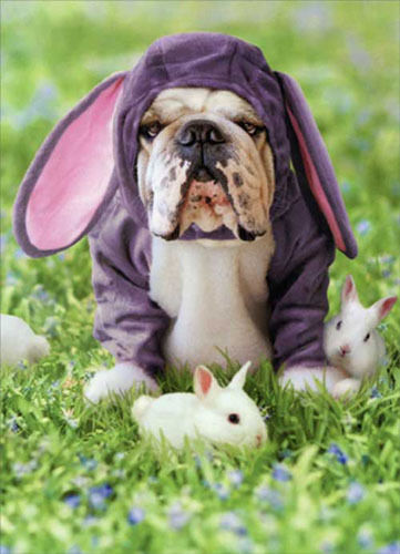Avanti Press Dog (Sully) in Bunny Suit Card