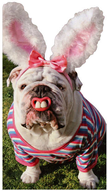 Avanti Press Bulldog with Bunny Teeth Card