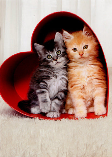 Avanti Press Two (2) Kittens in Heart Box Card