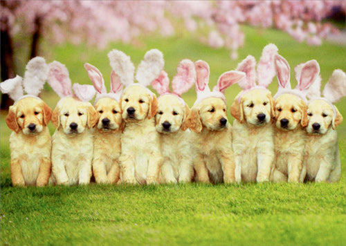 Avanti Press Row Of Puppy Bunnies Card