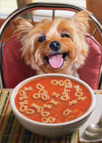 Avanti Press Dog with Get Well Soup Card