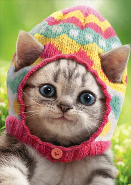 Avanti Press Kitten Wears Knit Egg Cap