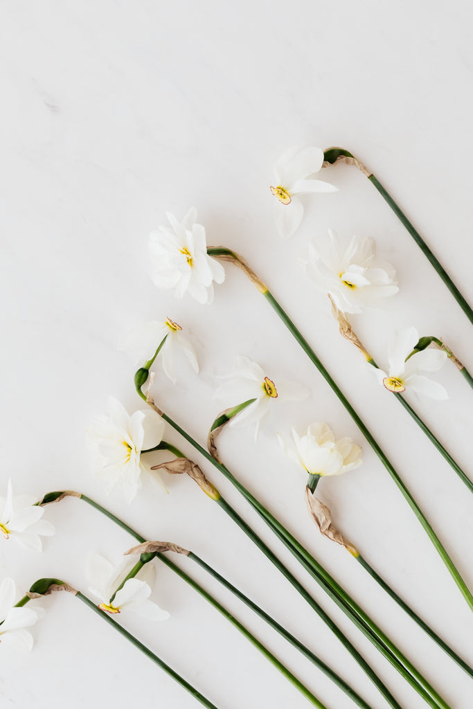 white daffodils on table