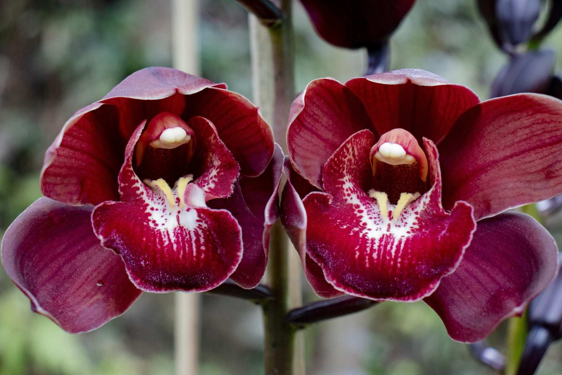 How to take care of orchids ? - Mainaam Garden