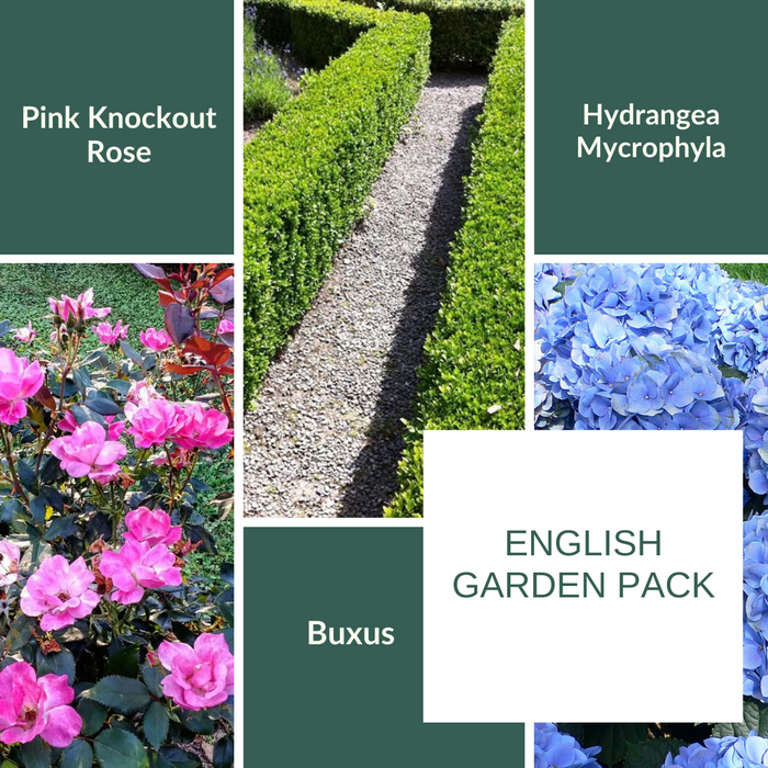 English Garden Pack - Mainaam Garden