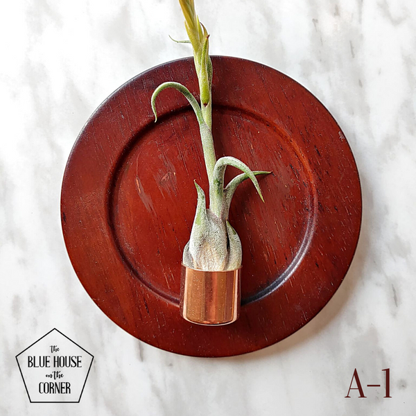 Coast + Copper Air Plant Holders