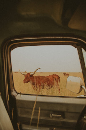 Longhorn Pickup Alex Callaghan Print