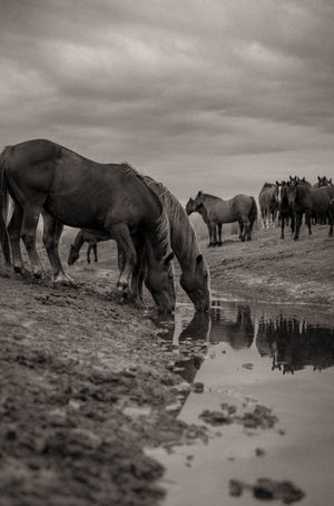 Watering Hole Alex Callaghan Print