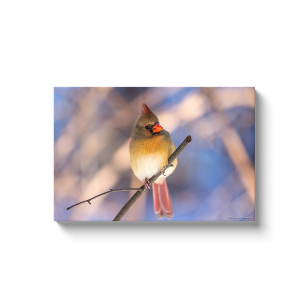 """Mrs Cardinal"" Canvas Wraps"