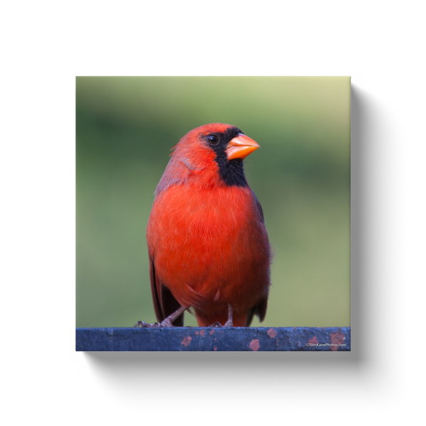 """Central Park Cardinal"" Canvas Wraps"