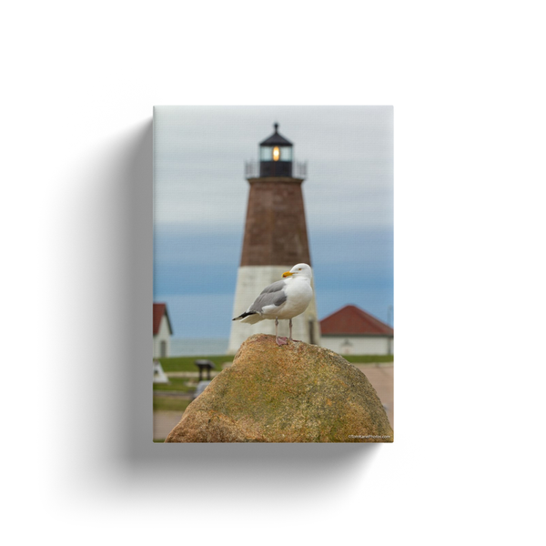 """Seagull at Point Judith Lighthouse, Narragansett, RI"" Canvas Wraps"