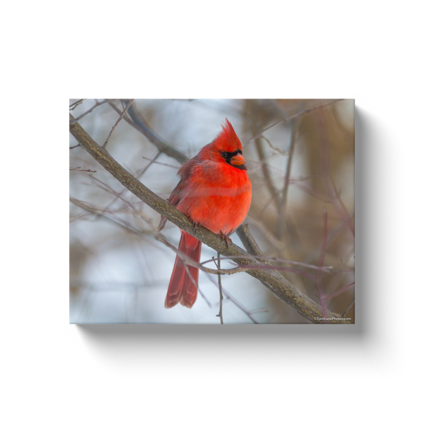 """Mr Cardinal"" Canvas Wraps"
