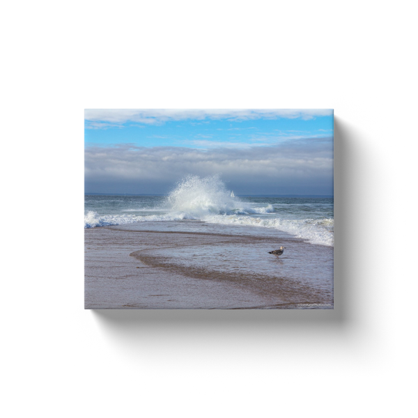 """Seagull at Sandy Point, Block Island"" Canvas Wraps"