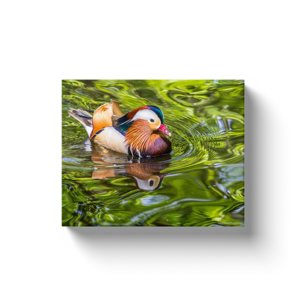 """Mandarin Duck"" Canvas Wraps"