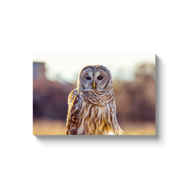 """Barred Owl"" Canvas Wraps"