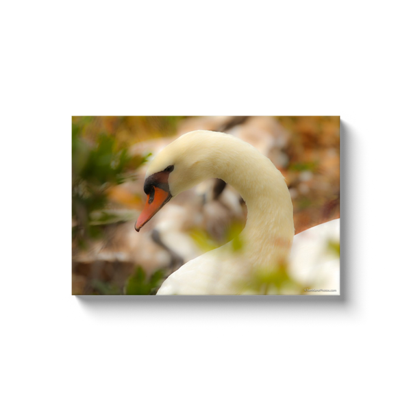 """Prospect Park Swan"" Canvas Wraps"