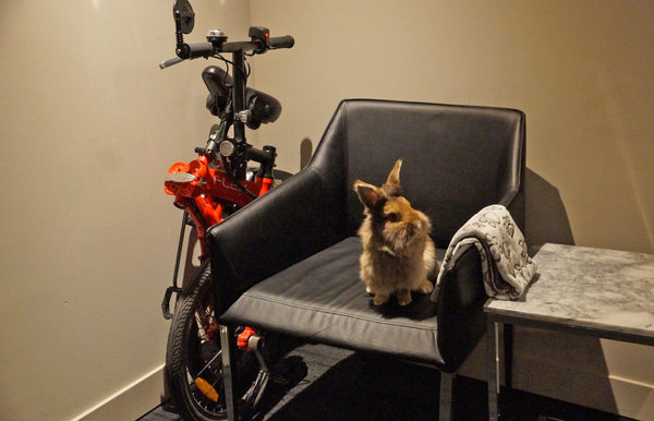Revelo FLEX takes up less space than a rabbit