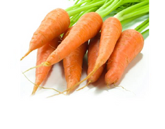 Carrot (Chantenay Red Cored)