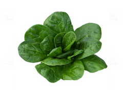 Spinach (Nobel Giant)