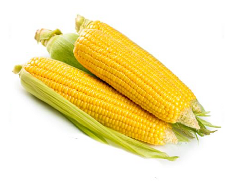 Sweet Corn (Golden Bantam)