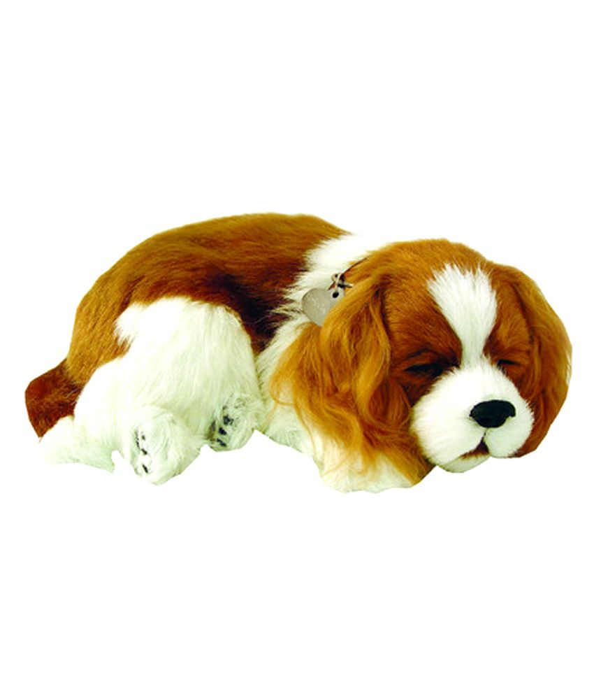 Perfect Petz Cavalier King Charles