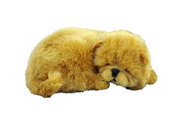 Perfect Petz Chow Chow