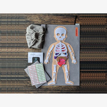 Load image into Gallery viewer, Felt Human anatomy playset