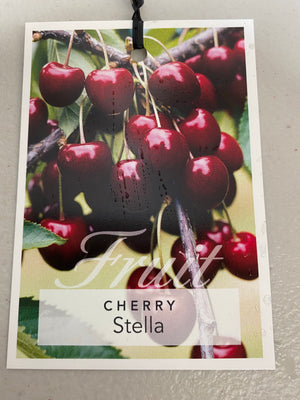Cherry Stella Tree box