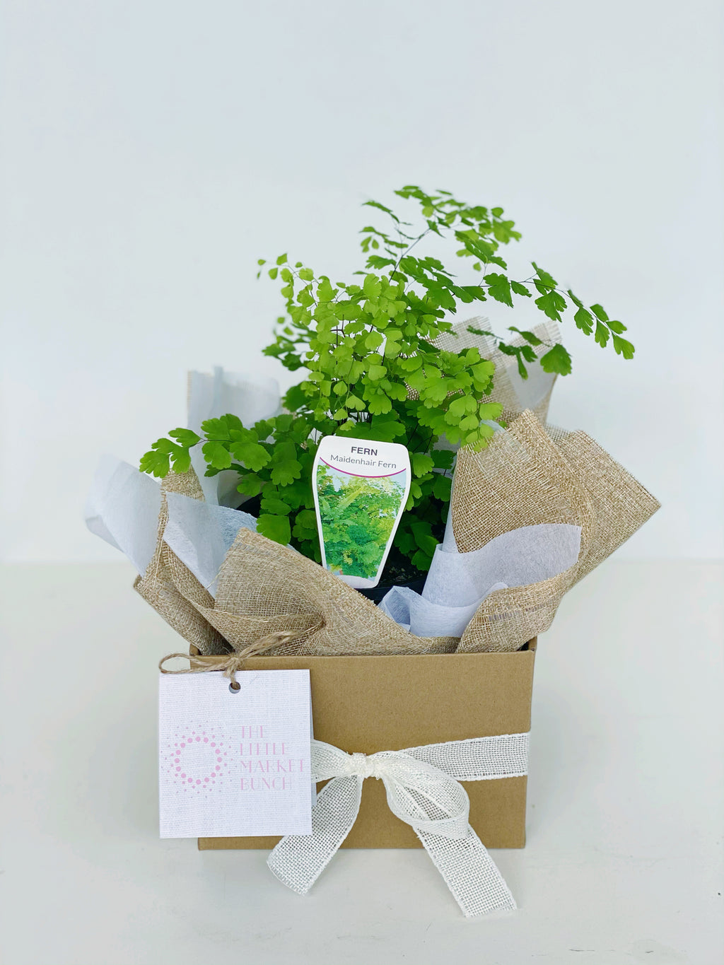Maidenhair Fern box