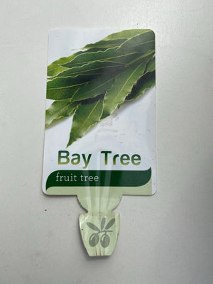 Bay Tree Box