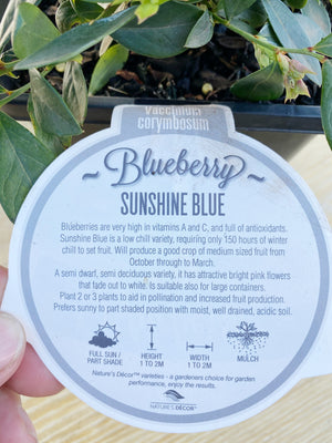 Blueberry fruit tree box