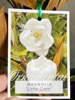 Magnolia tree box