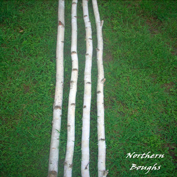 Four Medium White Birch Poles 8 ft - Northern Boughs
