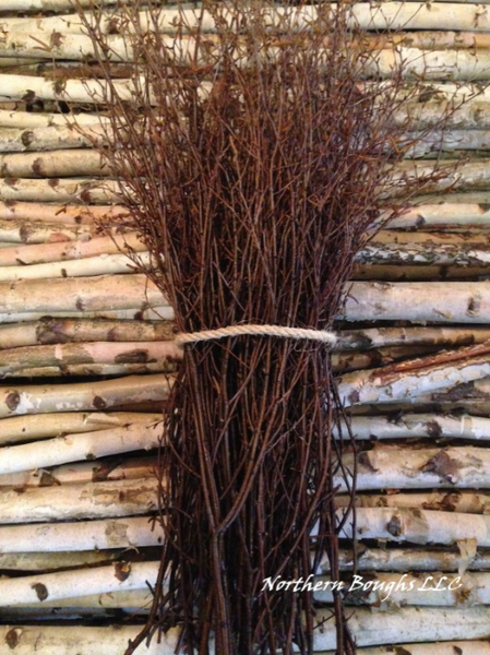 100 White Birch Branches - Northern Boughs