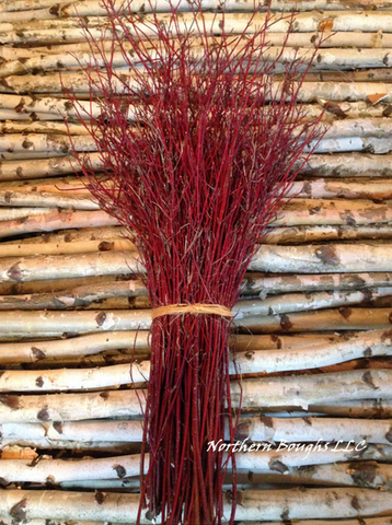 100 Red Dogwood Branches - Northern Boughs