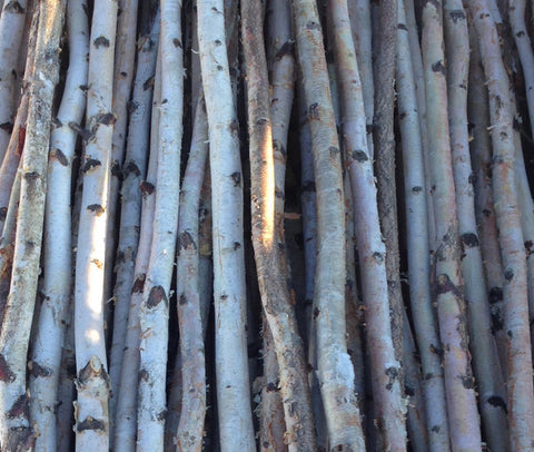 Four Thin White Birch Poles 8 ft - Northern Boughs