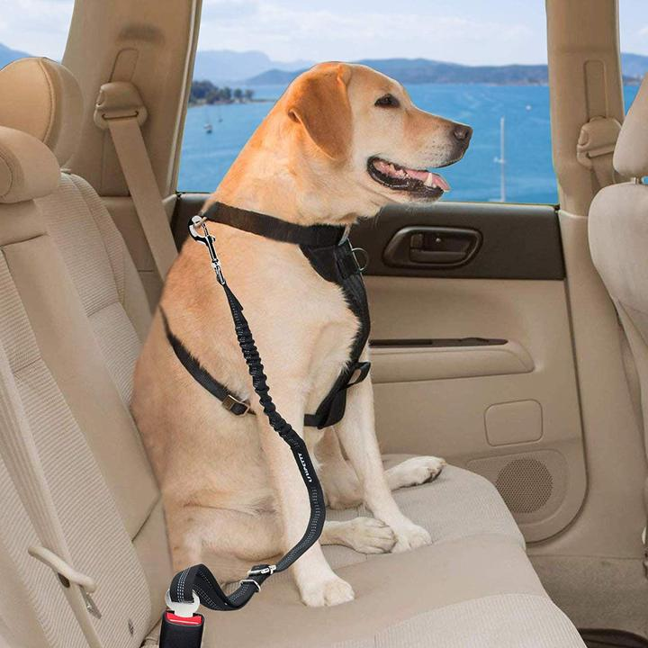 Seat Belt for Pets