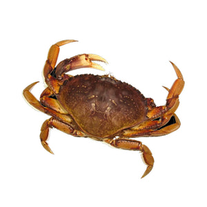 Live BC Crab - Single Clamp