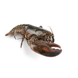 Live Canadian Lobster Single Claw