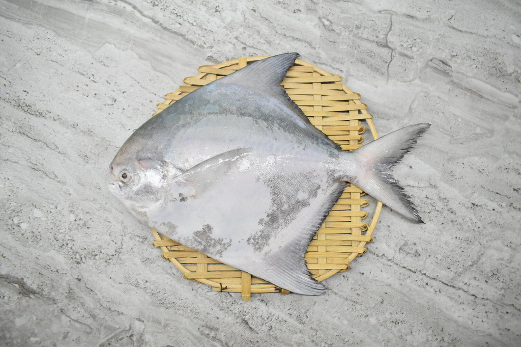 Chinese Pomfret |斗鲳鱼|