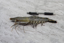 Load image into Gallery viewer, Tiger Prawns