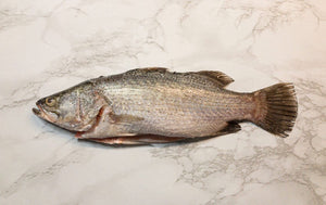 Sea Bass |Bhetki|
